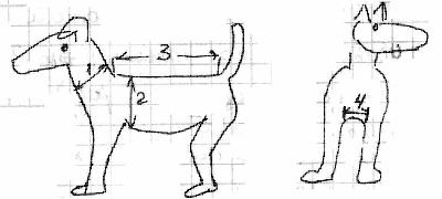 как снять мерки для шитья свитера для собак