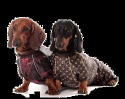 выкройка свитера для таксы и маленьких собак интернет магазин